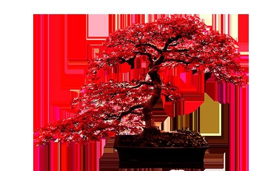Japansk lönn-bonsai med röda blad i rektangulär kruka