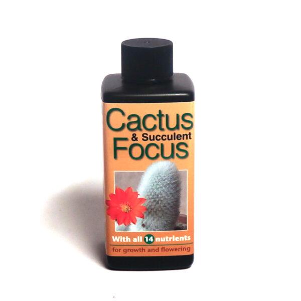 Cactus focus, suckulentnäring